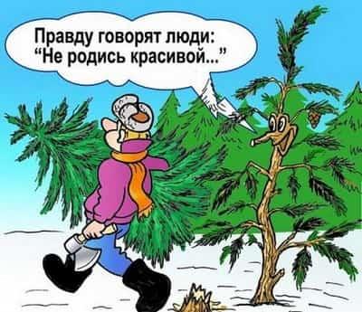 Анекдоты про новый год: новые и смешные до слез
