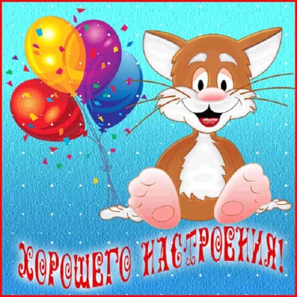 смешной кот с шариками