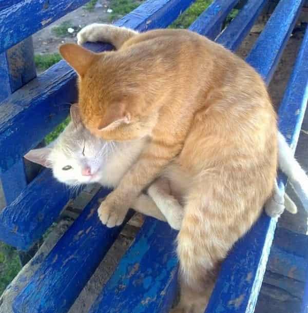 смешная картинки про котов