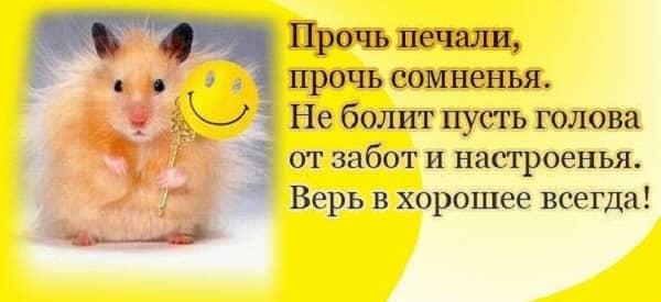 Картинки для настроения - прикольные и позитивные