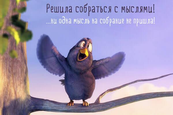 смешная птичка