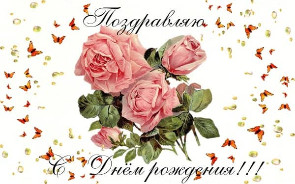 красивая картинка с розами