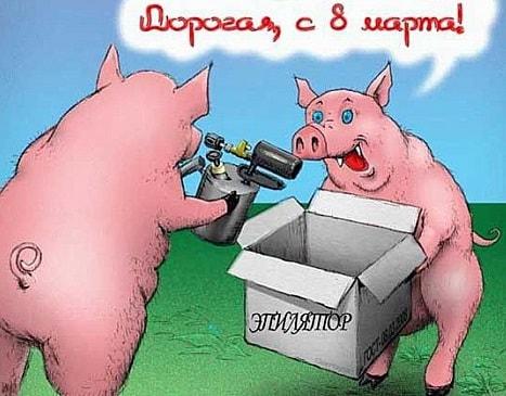 прикольные свинки