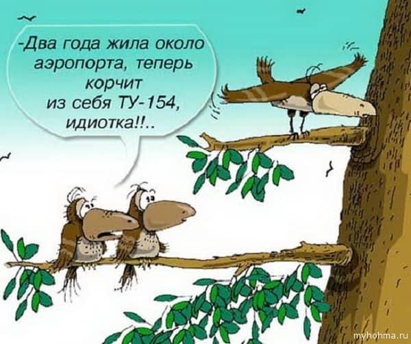 смешной анекдот про ворону
