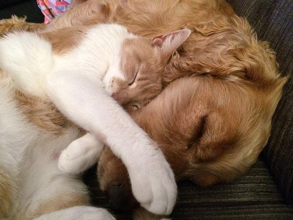 смешное фото со спящими собакой и котенком