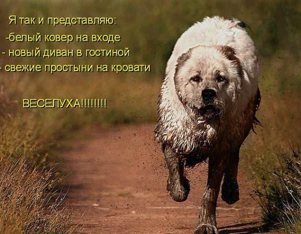 смешная картинка с грязным псом