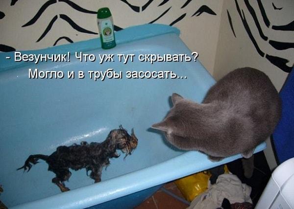 кошка и котенок в ванной