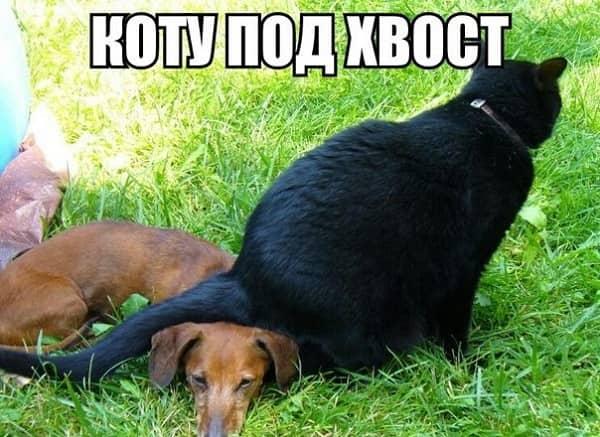 смешная картинка с надписью кот и собака