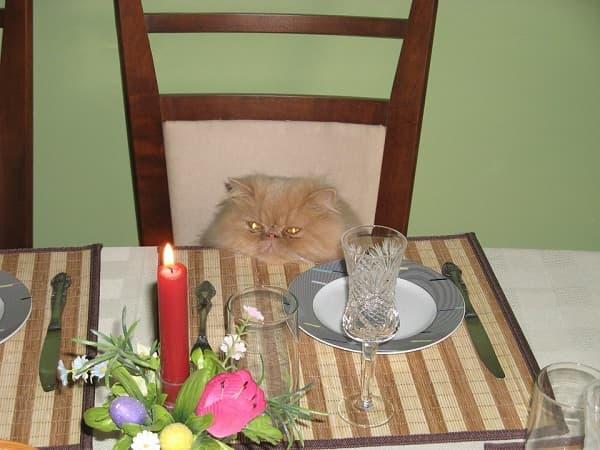 смешное фото кота за столом