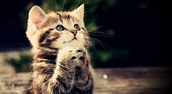 красивая картинка с котенком