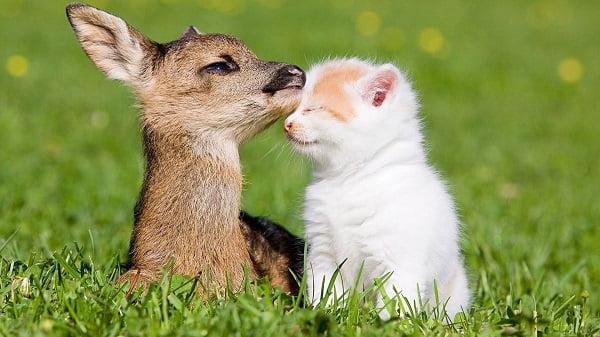 красивая картинка с котенком и олененком