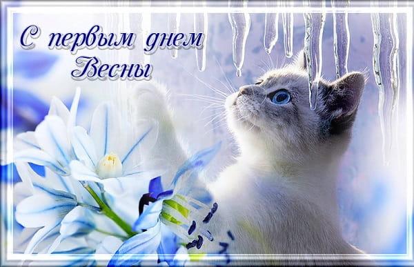 котенок и цветы