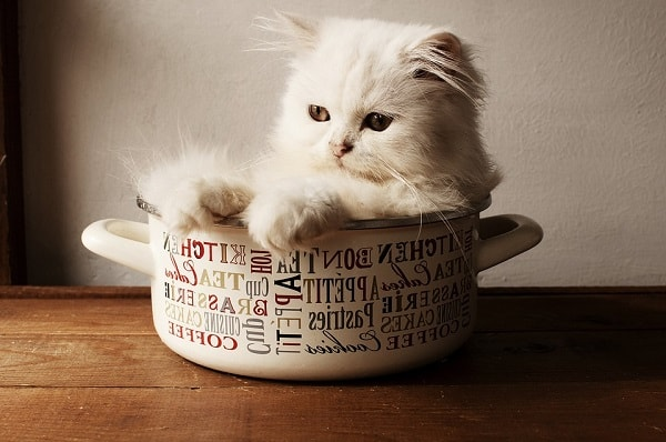 котенок в кастрюле