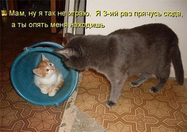 котенок в ведре