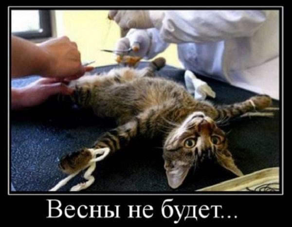 прикольная картинка про котика на кастрации