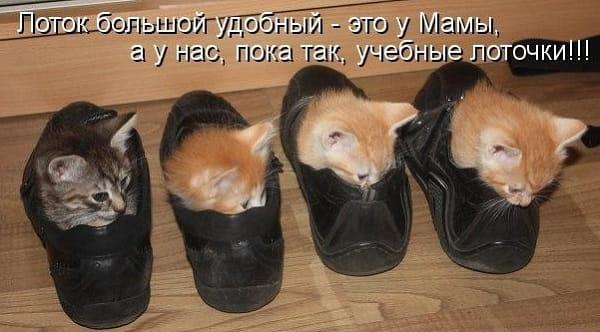 смешная картинка с котиками в туфлях