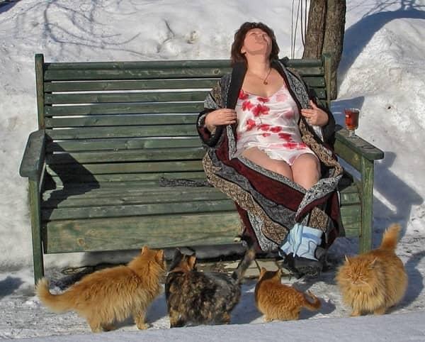 смешная картинка про котов весной