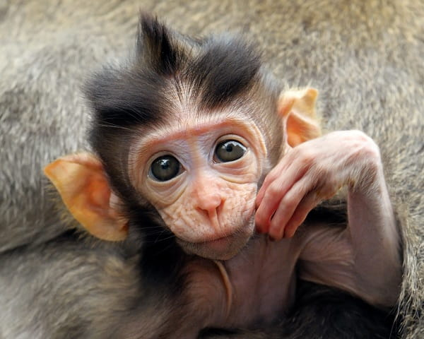 милая обезьянка
