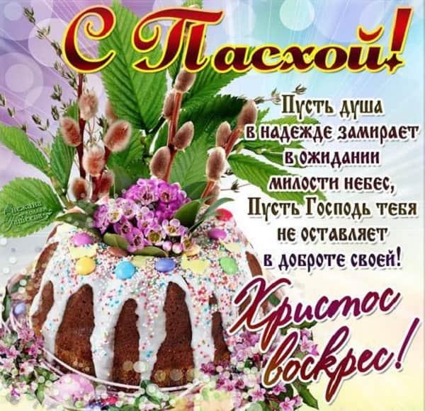 37 карточек в коллекции «Енот» пользователя Павел Александров в Яндекс
