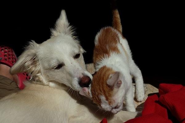 смешное фото собаки и кошки