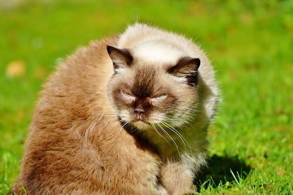 подозрительный кот