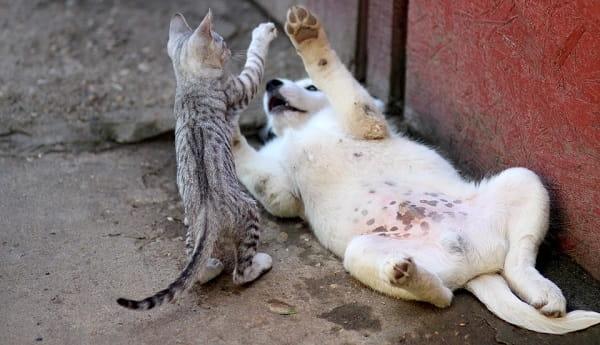 Кошки и собаки - смешные фото