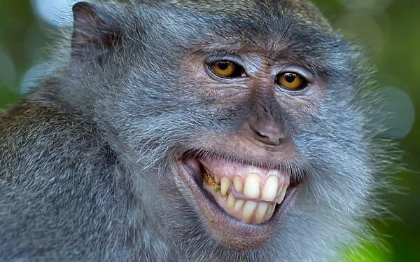 картинка смешная обезьяна