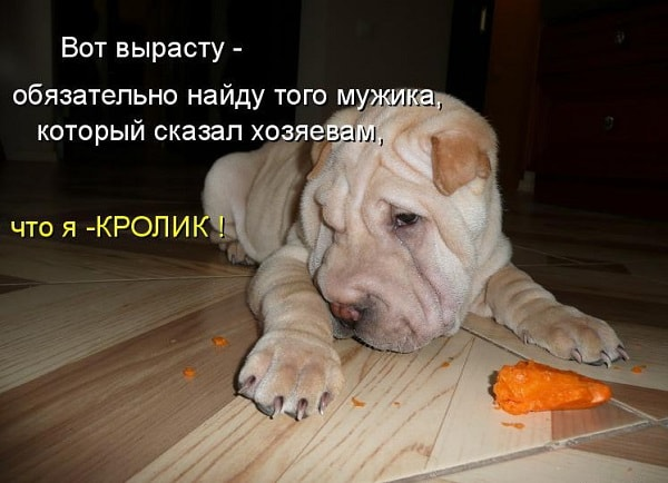 смешная собачка с морковкой