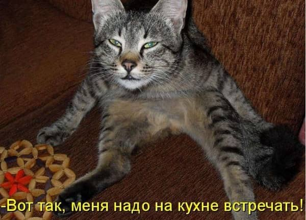 Красивые и смешные картинки с животными