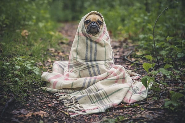 укутанная собака