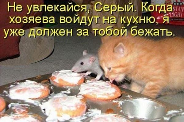 ужин кота и мыши