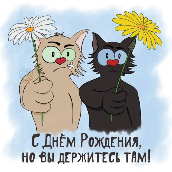 смешная открытка с котами