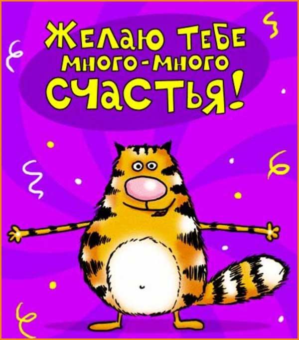 смешная открытка с котом