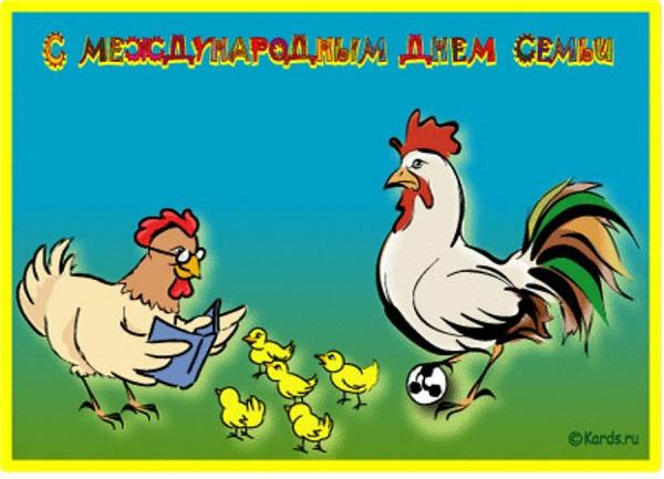 прикольная куриная семья