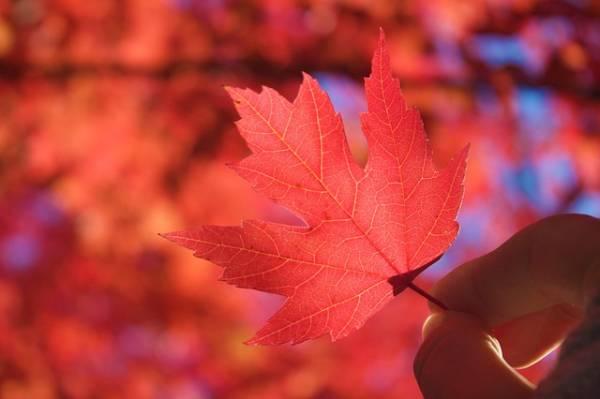 красивая картинка про осень-2