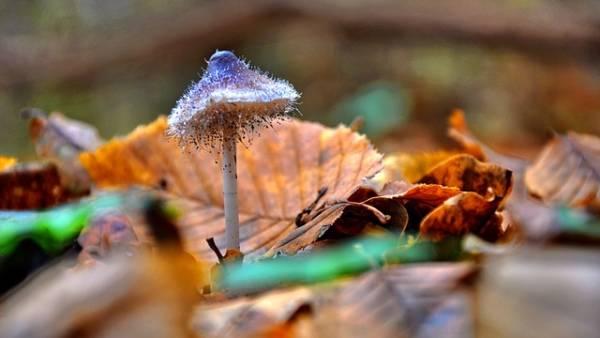 красивая картинка про осень-9