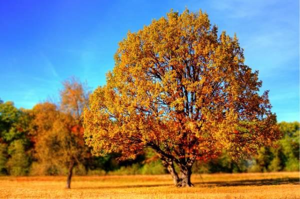 красивый осенний пейзаж-8