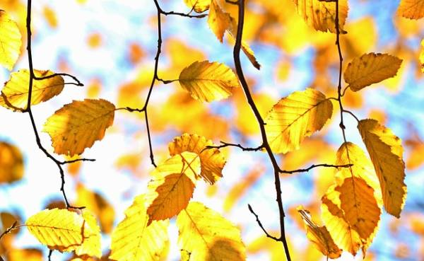 яркая картинка про осень-11