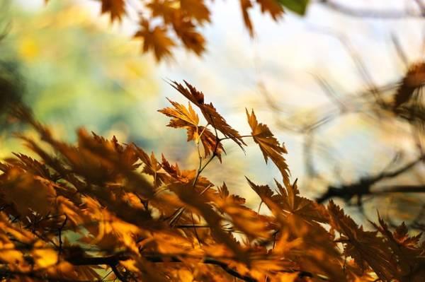 красивая картинка про осень-1