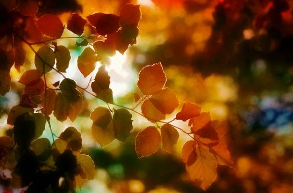 яркая картинка про осень-6