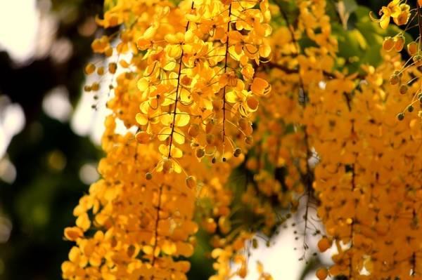 красивая картинка про осень-4