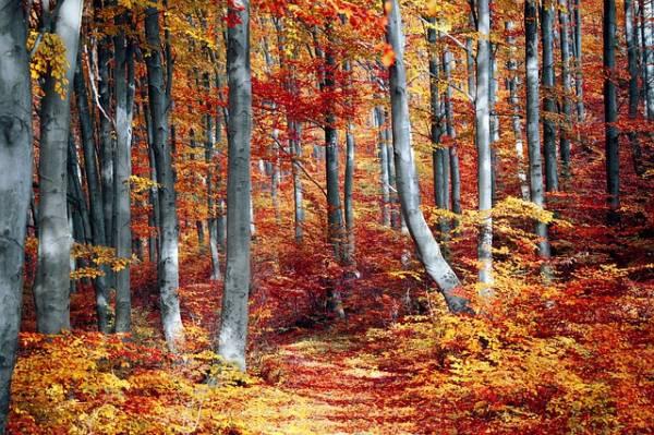 красивый осенний пейзаж-12