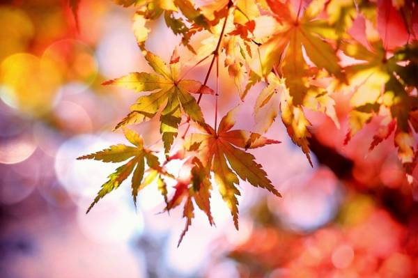 яркая картинка про осень-5
