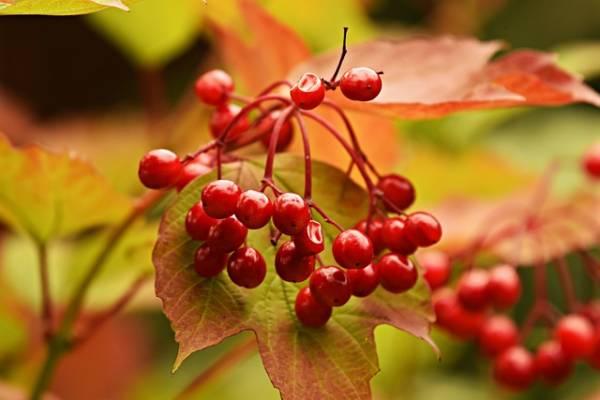 красивая картинка про осень-11