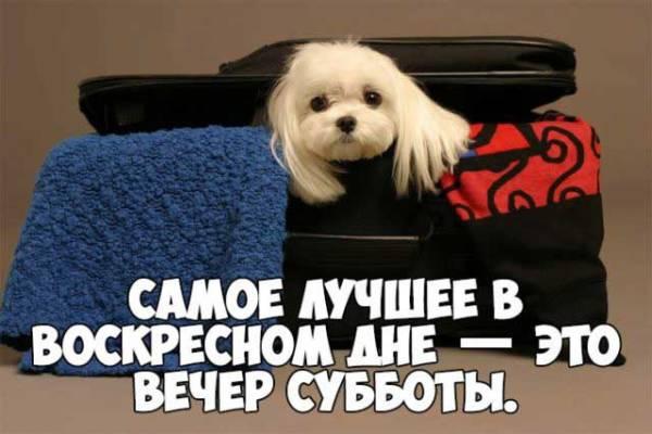 суббота картинка прикольная-7