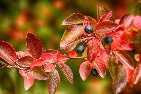 красивая картинка про осень-6