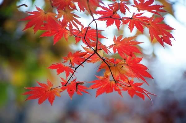 яркая картинка про осень-1