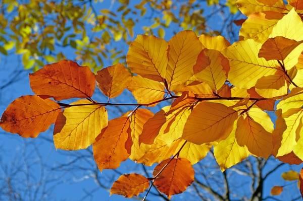 яркая картинка про осень-7