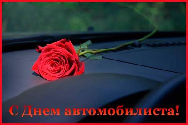 роза для автомобилиста