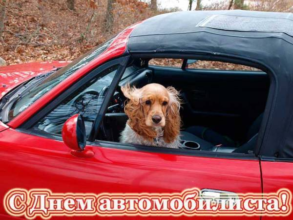 пес-автомобилист